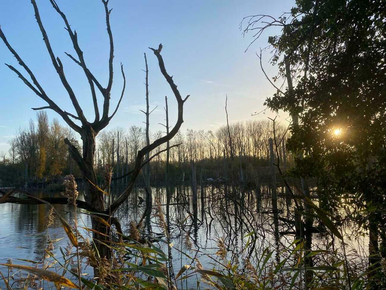 Samenwerking met Natuurpunt: Vuurkouter in Steendorp wordt natuurgebied